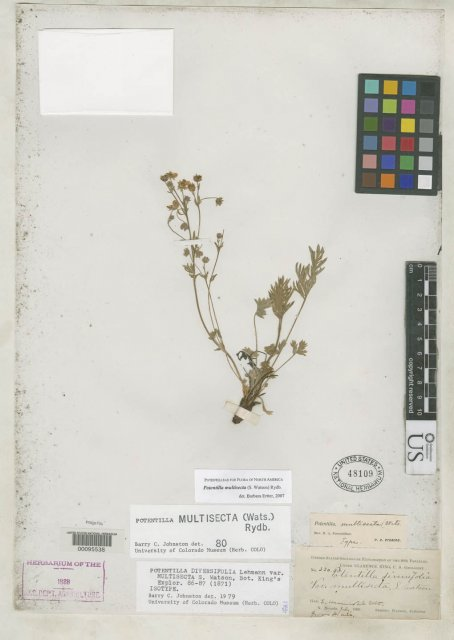 http://collections.mnh.si.edu/search/botany/?irn=2111612