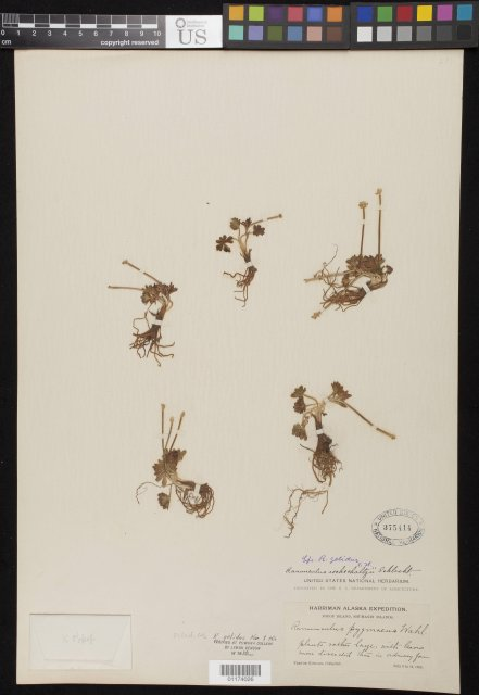 http://collections.mnh.si.edu/search/botany/?irn=10800891