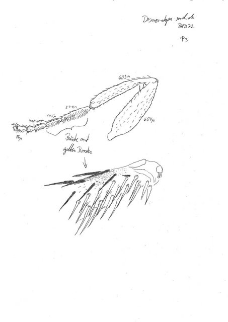 http://milichiidae.info/file/4132