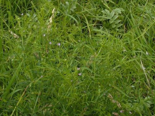 http://www.bioimages.org.uk/vfg/MWSt/Nikon950/2002/02-08/02-08-03/02H03E_1.jpg