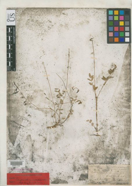 http://collections.mnh.si.edu/search/botany/?irn=2103842