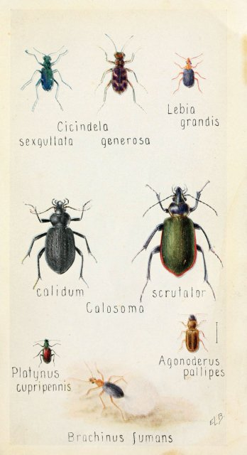 http://www.flickr.com/photos/biodivlibrary/6243852951/