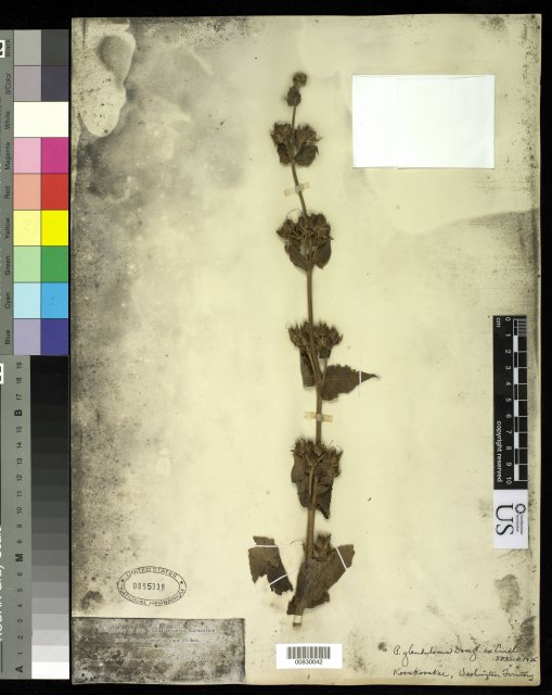 http://collections.mnh.si.edu/search/botany/?irn=10062629