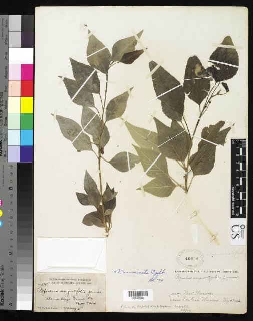 http://collections.mnh.si.edu/search/botany/?irn=10177189