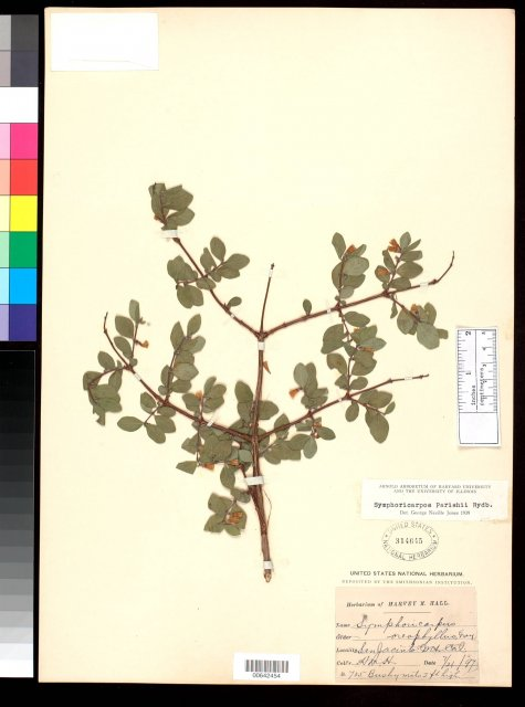 http://collections.mnh.si.edu/search/botany/?irn=2017925