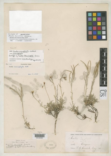 http://collections.mnh.si.edu/services/media.php?env=botany&irn=10081788