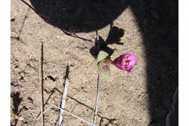 http://plants.usda.gov/java/largeImage?imageID=micu2_006_ahp.jpg