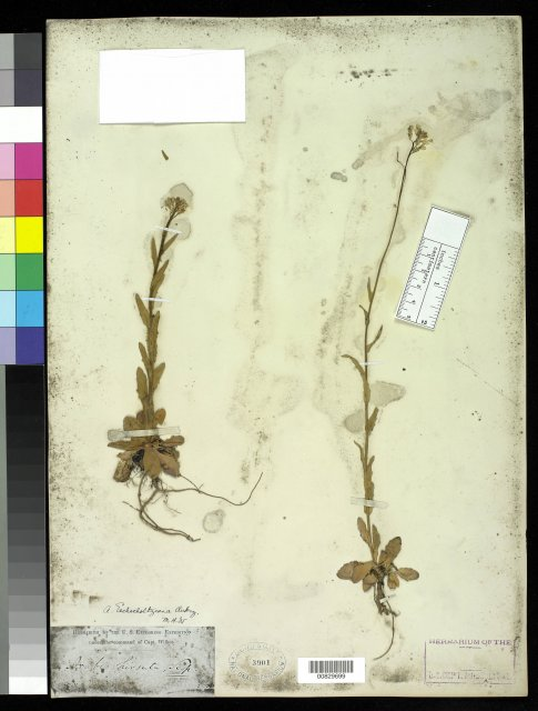 http://collections.mnh.si.edu/search/botany/?irn=2875625