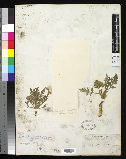http://collections.mnh.si.edu/services/media.php?env=botany&irn=10282958