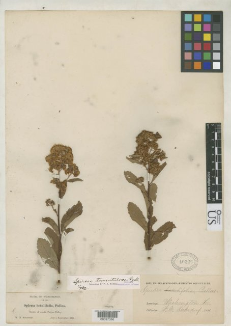 http://collections.mnh.si.edu/search/botany/?irn=2105958
