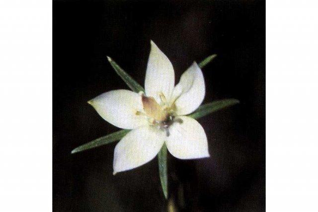 http://plants.usda.gov/gallery/large/loro_001_lhp.jpg