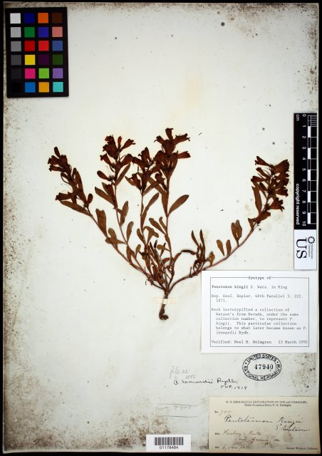 http://collections.mnh.si.edu/search/botany/?irn=10604645