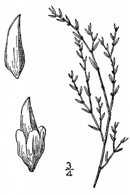 http://plants.usda.gov/java/largeImage?imageID=pole6_001_avd.tif