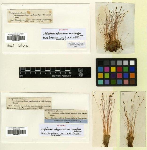 http://elmer.rbge.org.uk/bgbase/vherb/bgbasevherb.php?cfg=bgbase/vherb/bgbasevherb.cfg&specimens_barcode=E00455031