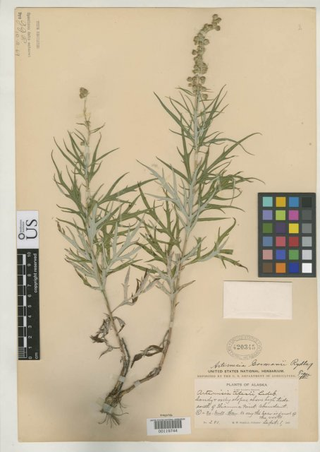 http://collections.mnh.si.edu/services/media.php?env=botany&irn=10126488
