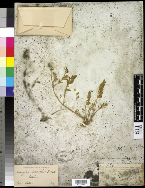 http://collections.mnh.si.edu/search/botany/?irn=10593293