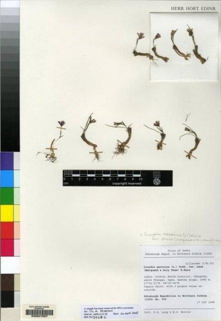 http://elmer.rbge.org.uk/bgbase/vherb/bgbasevherb.php?cfg=bgbase/vherb/bgbasevherb.cfg&specimens_barcode=E00047057