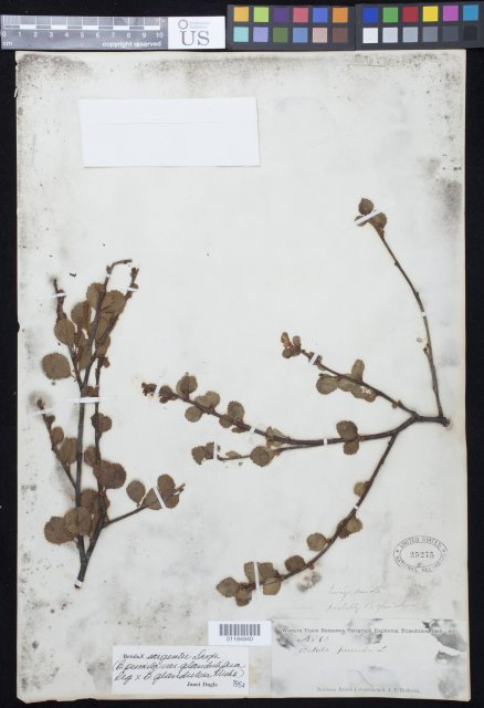 http://collections.mnh.si.edu/search/botany/?irn=10849333