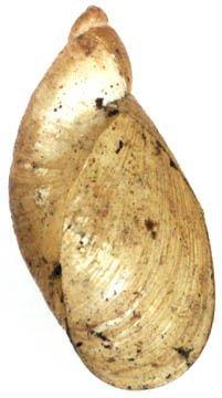 http://www.biolib.cz/IMG/GAL/1485.jpg
