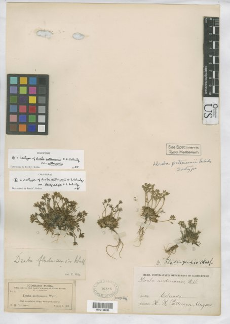 http://collections.mnh.si.edu/search/botany/?irn=10085984