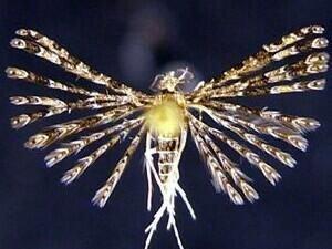 http://mothphotographersgroup.msstate.edu/species.php?hodges=2313