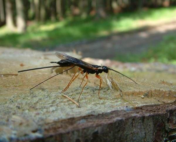 http://www.biolib.cz/en/image/id1106/
