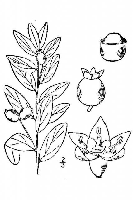 http://plants.usda.gov/java/largeImage?imageID=coli12_001_avd.tif