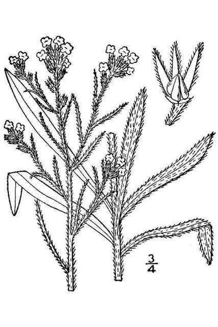 http://plants.usda.gov/java/largeImage?imageID=crfe3_001_avd.tif
