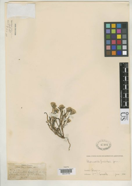 http://collections.mnh.si.edu/search/botany/?irn=2113599