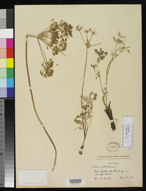 http://collections.mnh.si.edu/search/botany/?irn=2109491