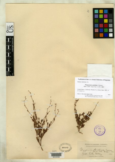 http://collections.mnh.si.edu/search/botany/?irn=10077329