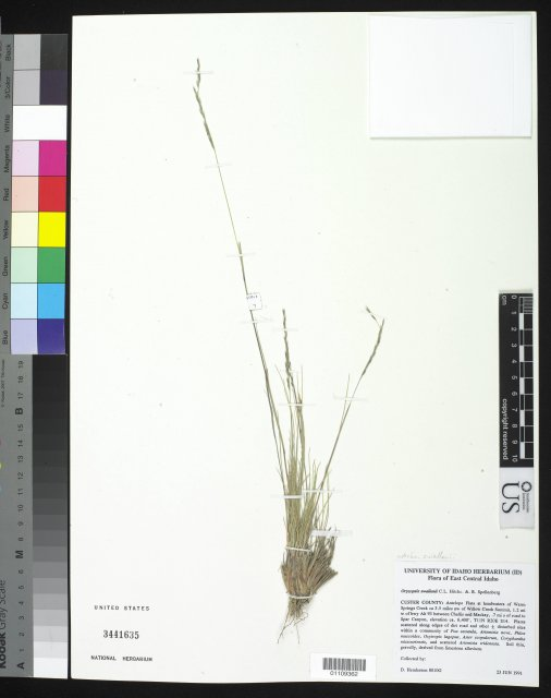 http://collections.mnh.si.edu/search/botany/?irn=10246883