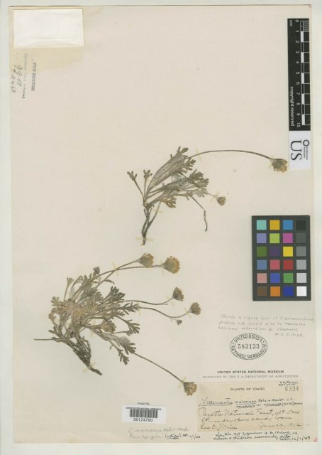 http://collections.mnh.si.edu/search/botany/?irn=2092071