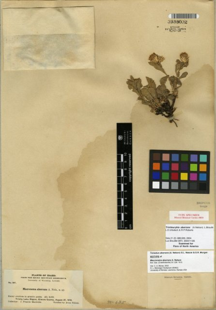 http://images.mobot.org/tropicosdetailimages/Tropicos/027/07ECAE5B-E0C1-4C1D-98AE-D37076063B92.jpg