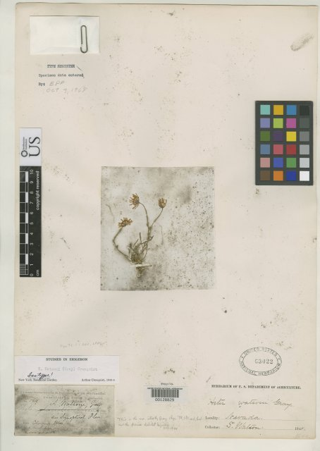 http://collections.mnh.si.edu/search/botany/?irn=2082763