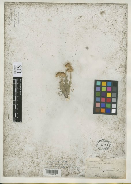 http://collections.mnh.si.edu/search/botany/?irn=2113380