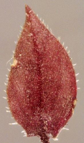 http://www.bioimages.org.uk/vfg/MWSt/Pix+OM/2001/01-07/01-07-01/01G01M+6.jpg