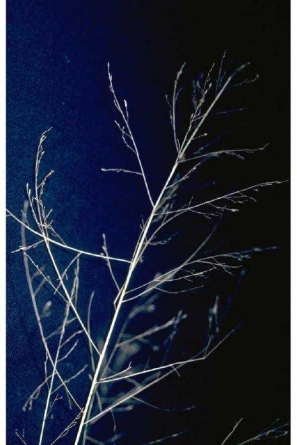 http://plants.usda.gov/gallery/large/puai_002_lvp.jpg