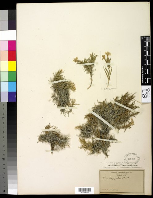 http://collections.mnh.si.edu/search/botany/?irn=10817884