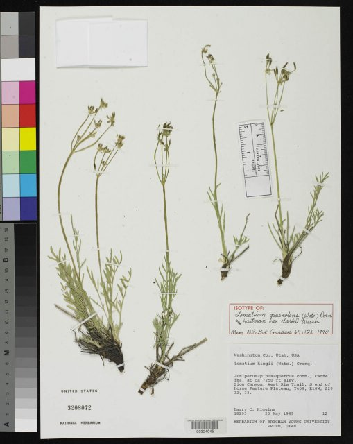 http://collections.mnh.si.edu/search/botany/?irn=2121466