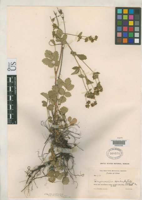 http://collections.mnh.si.edu/search/botany/?irn=2111230