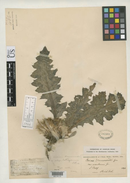 http://collections.mnh.si.edu/search/botany/?irn=2131491