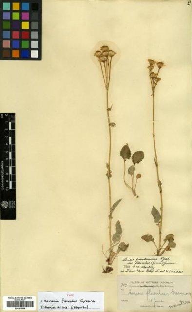 http://elmer.rbge.org.uk/bgbase/vherb/bgbasevherb.php?cfg=bgbase/vherb/bgbasevherb.cfg&specimens_barcode=E00385554