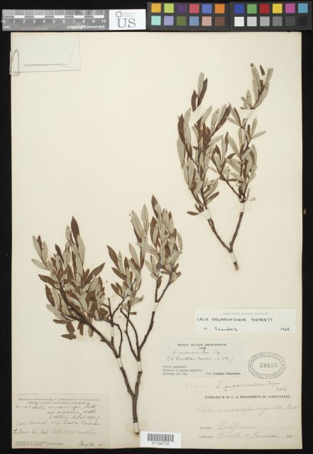 http://collections.mnh.si.edu/search/botany/?irn=10841689