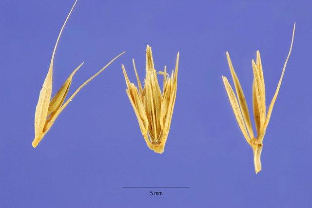 http://plants.usda.gov/gallery/large/hopu_005_lhp.jpg