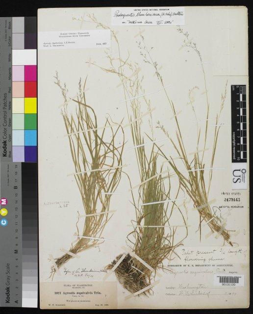 http://collections.mnh.si.edu/services/media.php?env=botany&irn=10063425