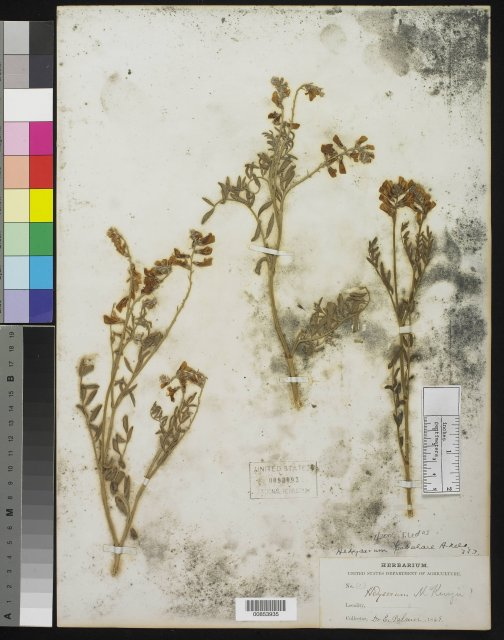 http://collections.mnh.si.edu/search/botany/?irn=10183892