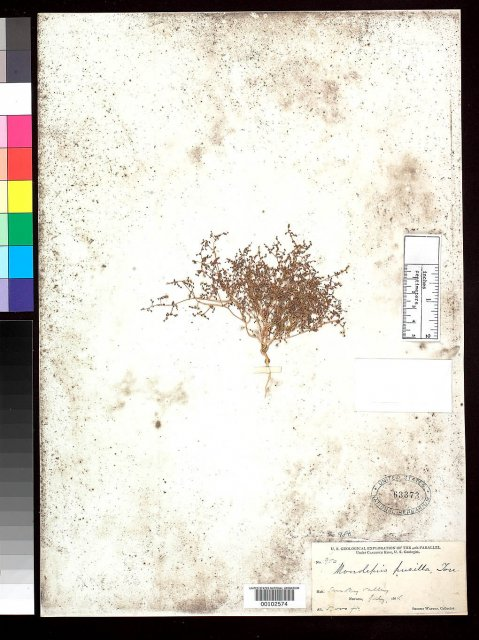 http://collections.mnh.si.edu/search/botany/?irn=2162733