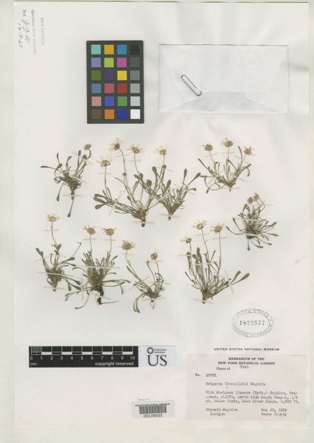 http://collections.mnh.si.edu/search/botany/?irn=2163430