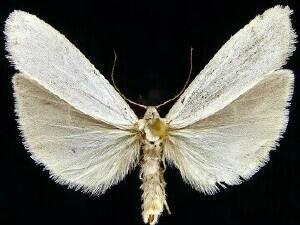 http://mothphotographersgroup.msstate.edu/species.php?hodges=8051